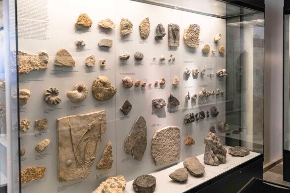 Palaeontologisches-Museum-der-Uni-Zürich